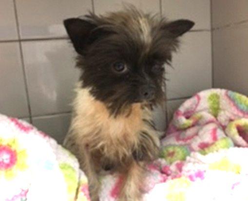 Alberta Animal Rescue Crew Society – Douglas Square Pet Clinic