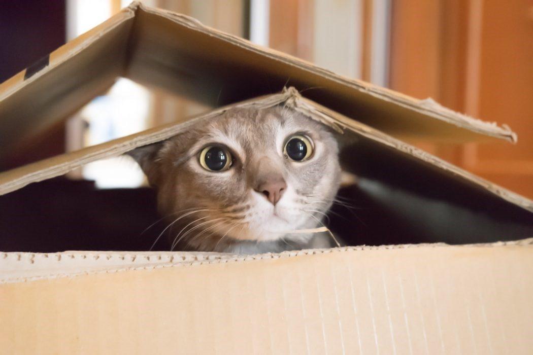 Feline Environment Enrichment – Douglas Square Pet Clinic